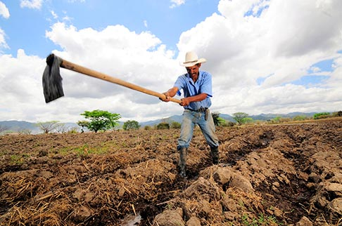 A farmer is seen digging irrigation channels in Alauca, Honduras. A predicted one degree Celsius temperature increase by 2020 could seriously endanger the livelihoods of corn and bean farmers in Central America, says a report, Tortillas on the Roaster, published by U.S. Catholic Relief Services, which led several international organizations in the study.