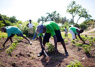 Haitians work on a test garden for growing hot peppers in Haiti, a project aided by Catholic Relief Services as part of a multiyear program of soil conservation, agricultural improvements.