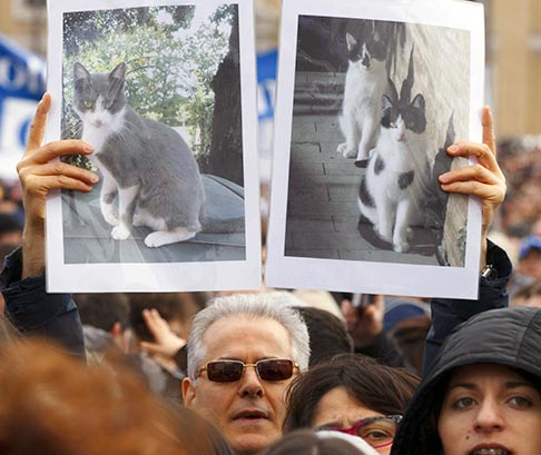 A man holds images of cats before Pope Benedict recites his final Angelus as pope from his apartment window overlooking St. Peter's Square Feb. 24. His papacy will officially end Feb. 28 at 8 p.m. Rome time. Pope Benedict is known for his love of cats.