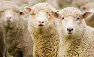 My sheep hear my voice. I know them, and they follow me - John 10.27