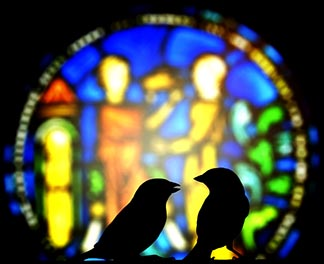 Look at the birds of the air; . . . Are you not of more value than they? – Matthew 6.26